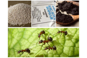 Как избавиться от муравьев в бытовке